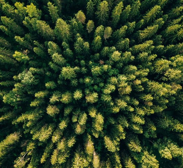 Un año récord en sostenibilidad